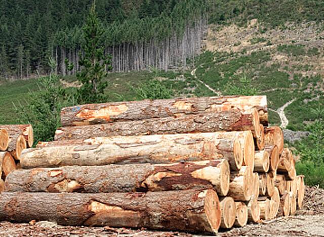 为什么说欧洲进口燃木是燃木壁炉燃料首选?