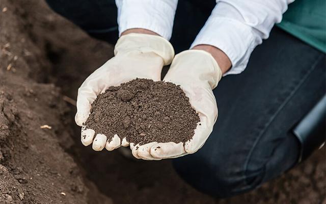 燃木壁炉木灰适合土壤中